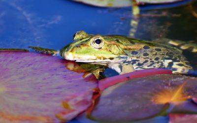 Das Frosch-Prinzip